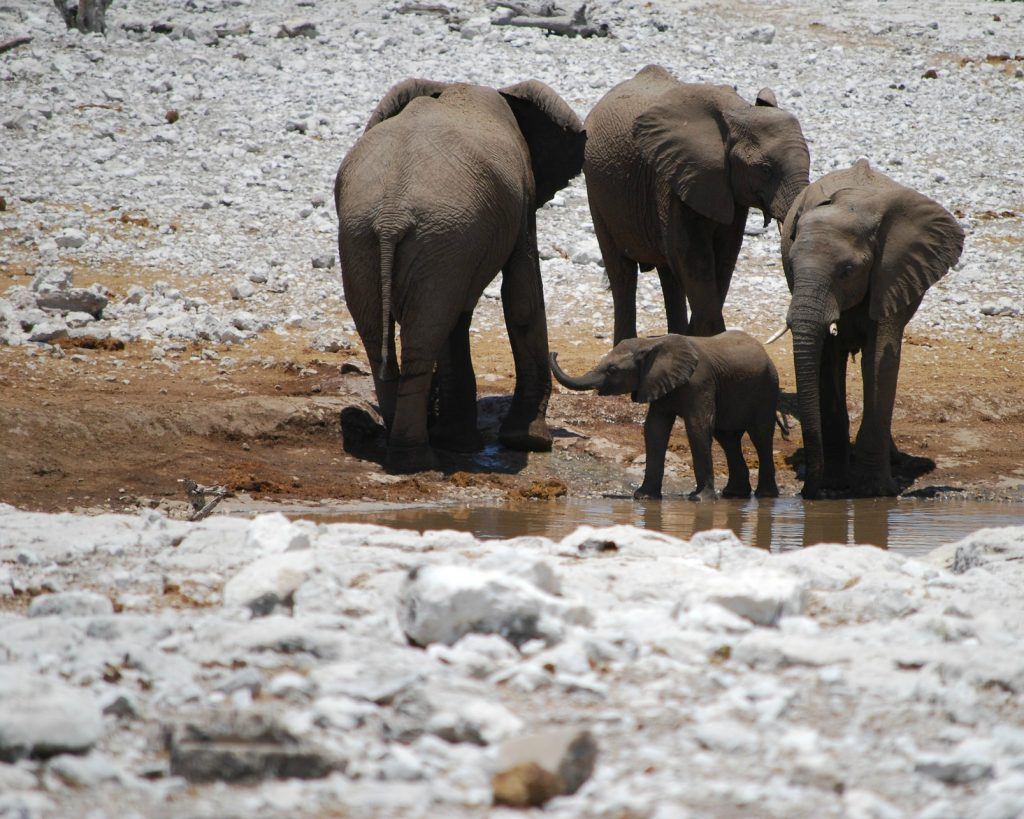 Elephants Water Conservation
