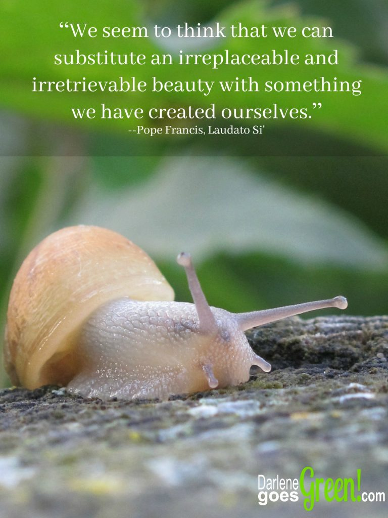Pope Francis Irretrievable Beauty Quote