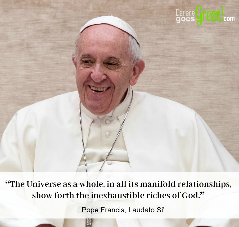Laudato Si Francis Harmony of Creation Relationships